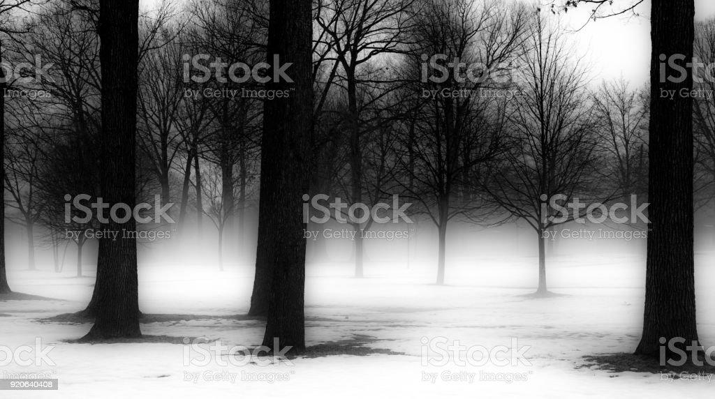 Winter Trees in Michigan stock photo