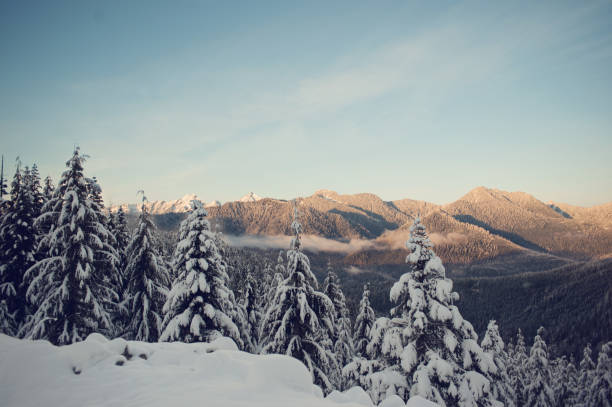 Winter trees in the mountains stock photo