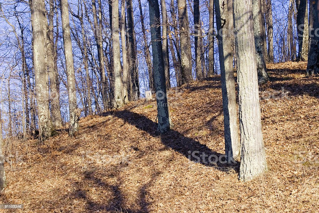 Winter Trees on a Hill royalty-free stock photo