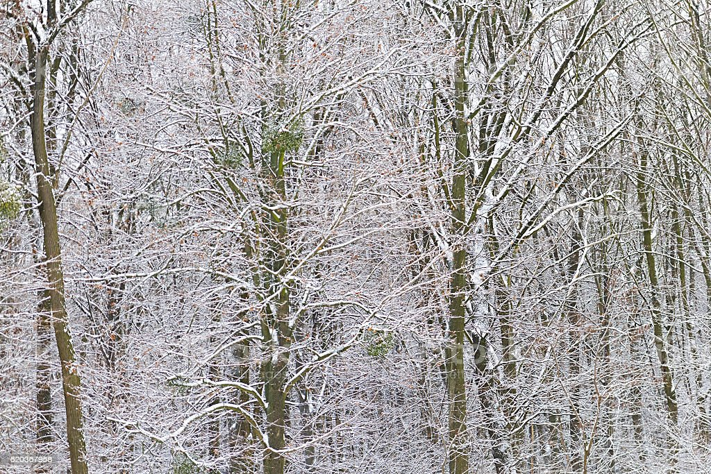 Árvores de inverno na Neve foto de stock royalty-free