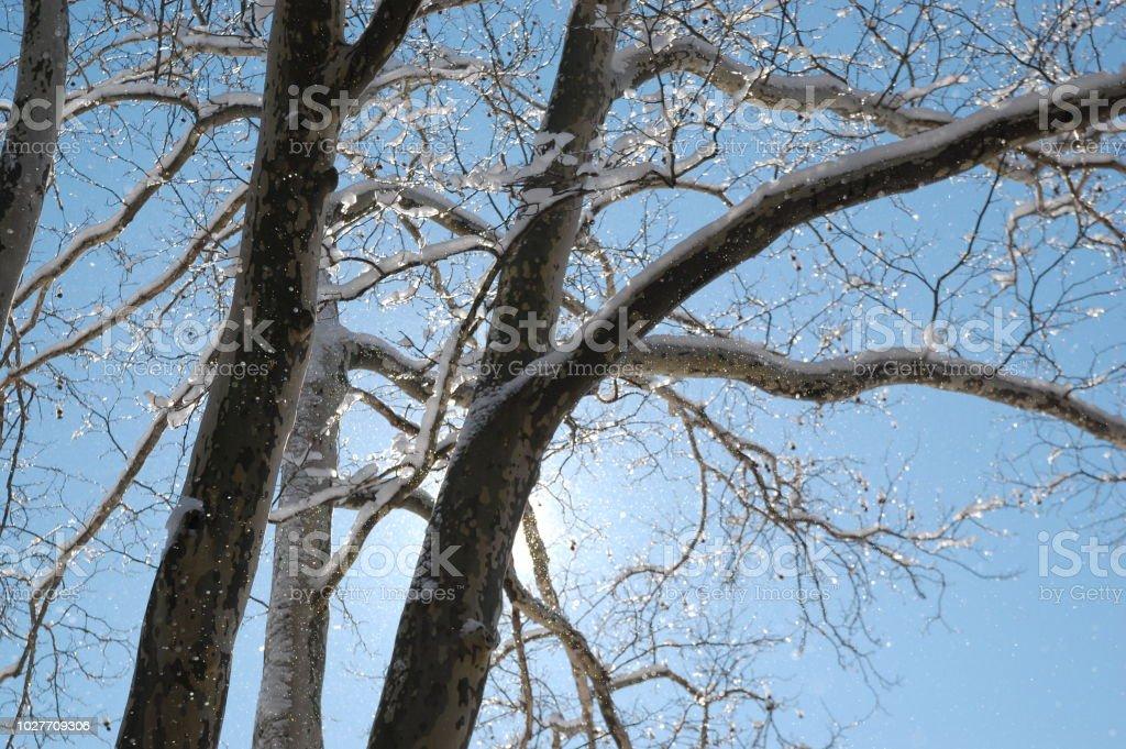 겨울맞이 나무 스톡 사진