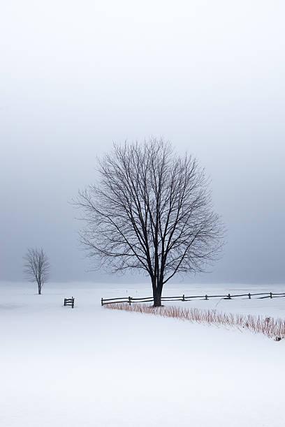 Arbres en hiver - Photo