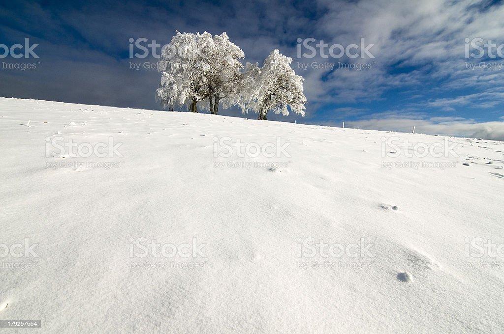 Winterbäume – Foto