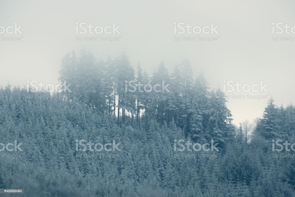 Winter Trees - Royalty-free Beauty In Nature Stock Photo