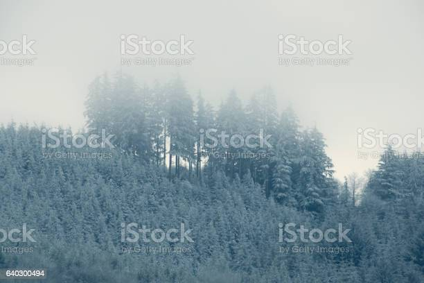 Winter Trees Stock Photo - Download Image Now