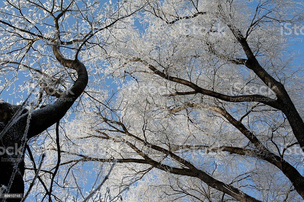 Winterbäume Lizenzfreies stock-foto