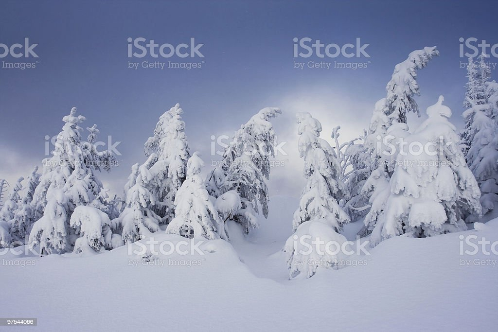 Arbres en hiver photo libre de droits