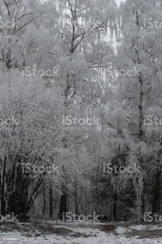 Winter Trees Sweden Vasteras royalty-free stock photo