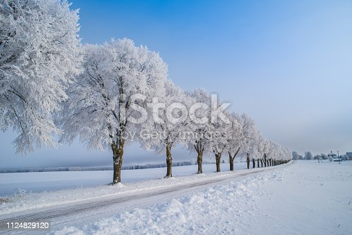 istock winter trees with frost 1124829120