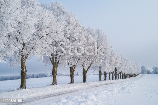 istock winter trees with frost 1124829155