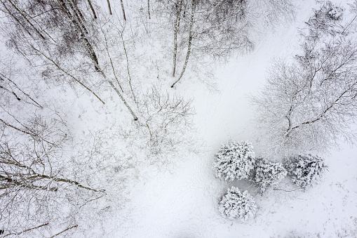 winter trees with snow and hoarfrost. aerial photo