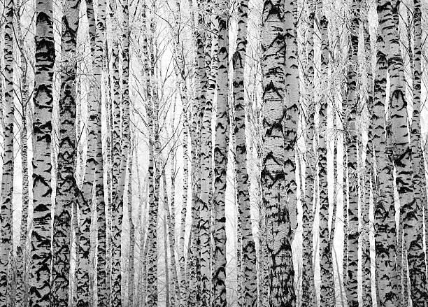 Winter Badehose Birken – Foto