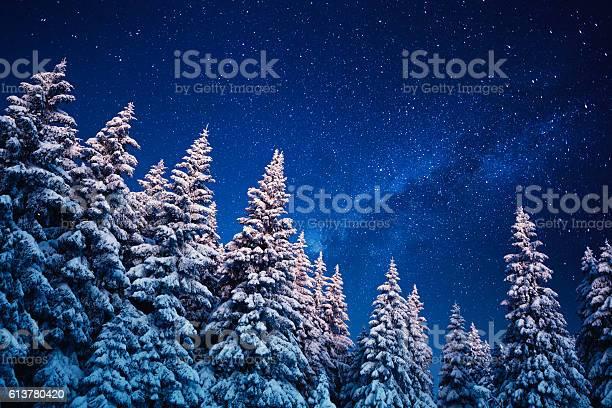 Photo of Winter Under The Stars