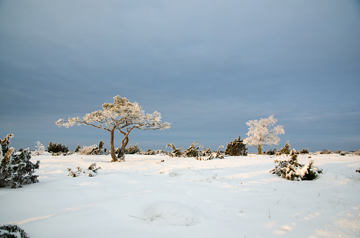 istock Winter view with frosty trees in a plain landscape 507511090