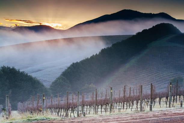 Winter Vines in Yarra Valley Australia stock photo