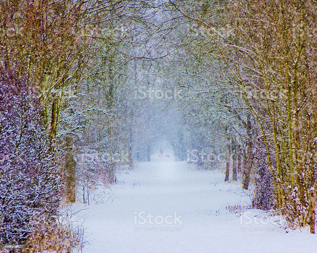 Winter Vision stock photo
