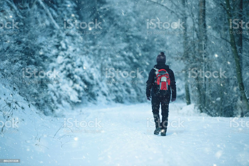 Winter Walk In The Morning royalty-free stock photo