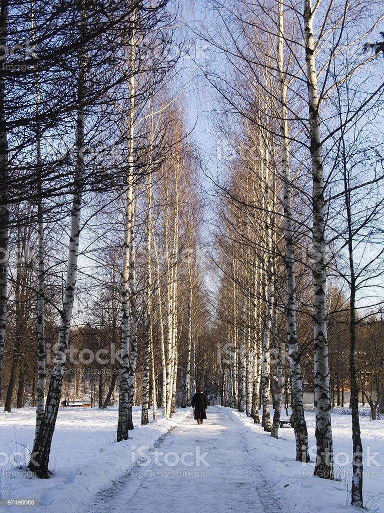 Winter way royalty-free stock photo