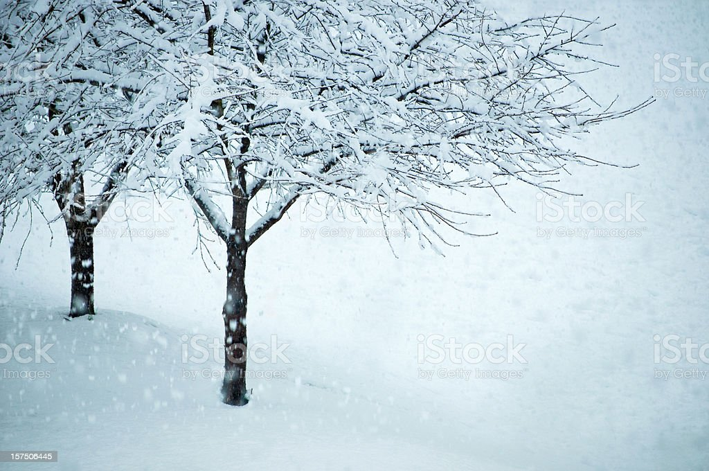 winter weather royalty-free stock photo