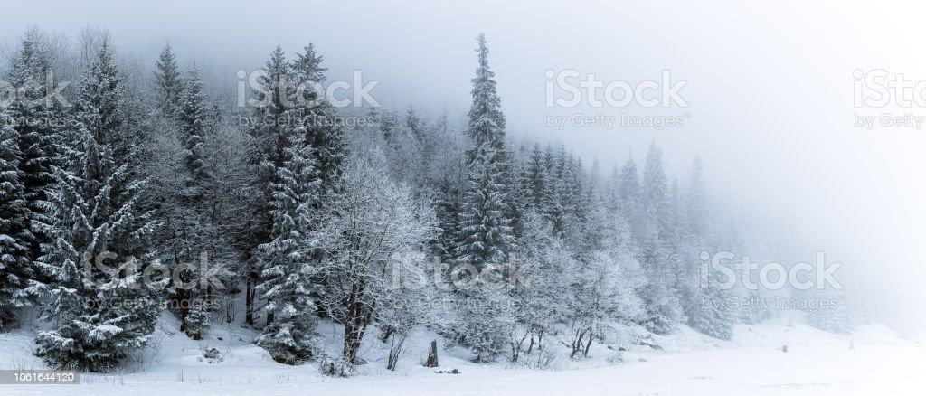 Winter weißen Wald mit Schnee, Weihnachten Hintergrund – Foto