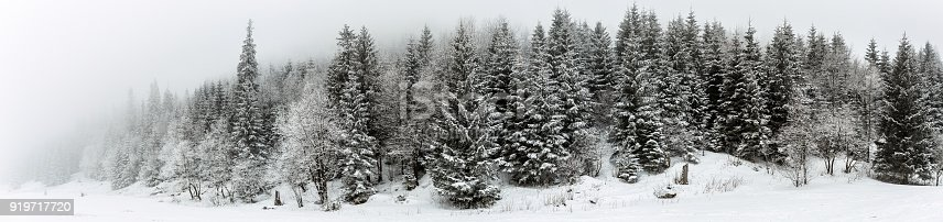 1061644120 istock photo Winter white forest with snow, Christmas background 919717720