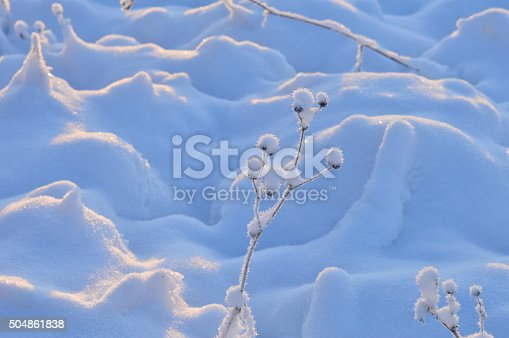 istock Winter white snow has covered all plants 504861838