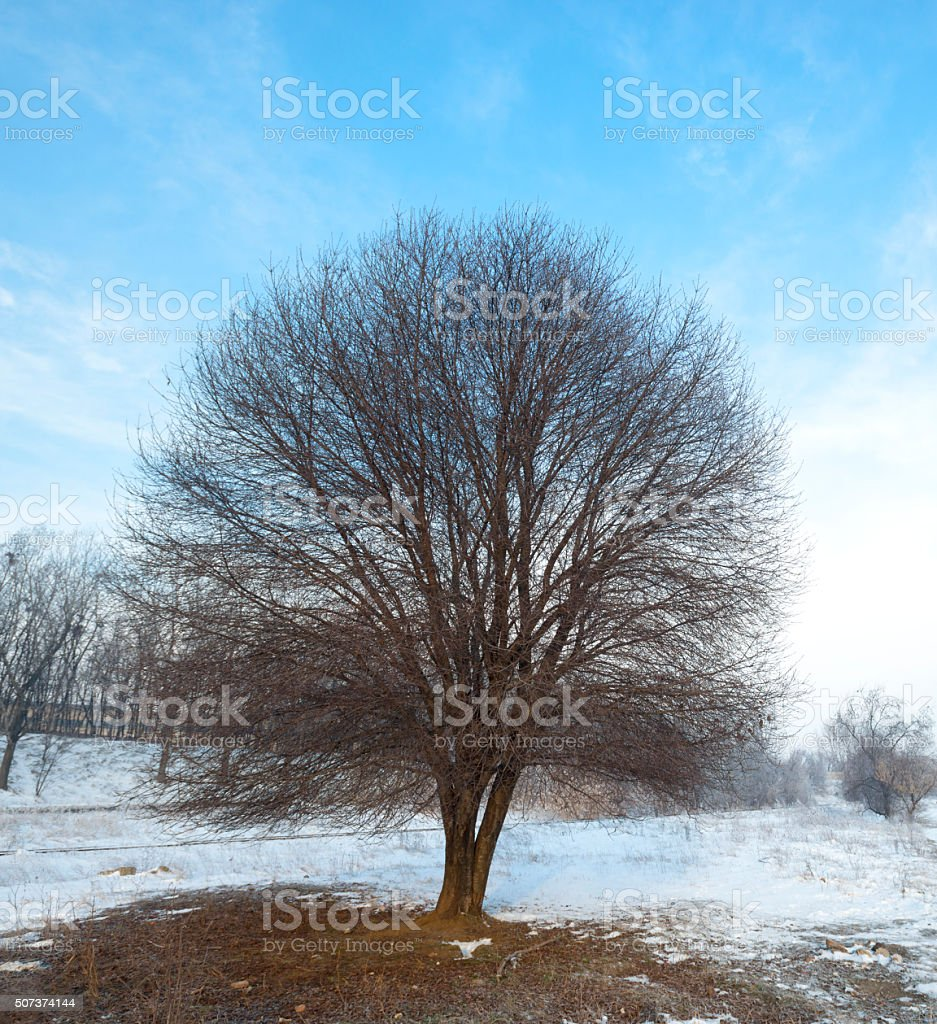 Winter with snow and a lonely tree in a field stock photo