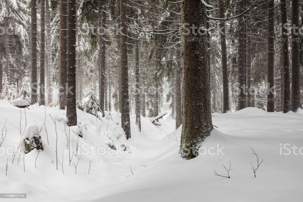 Invierno Con Nieve En El Bosque De Turingia Cerca De Oberhof Alemania Foto De Stock Y Mas Banco De Imagenes De Aire Libre Istock