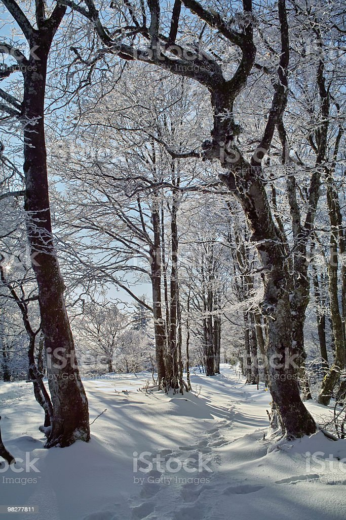 winter with trail in Black Forest royalty-free stock photo