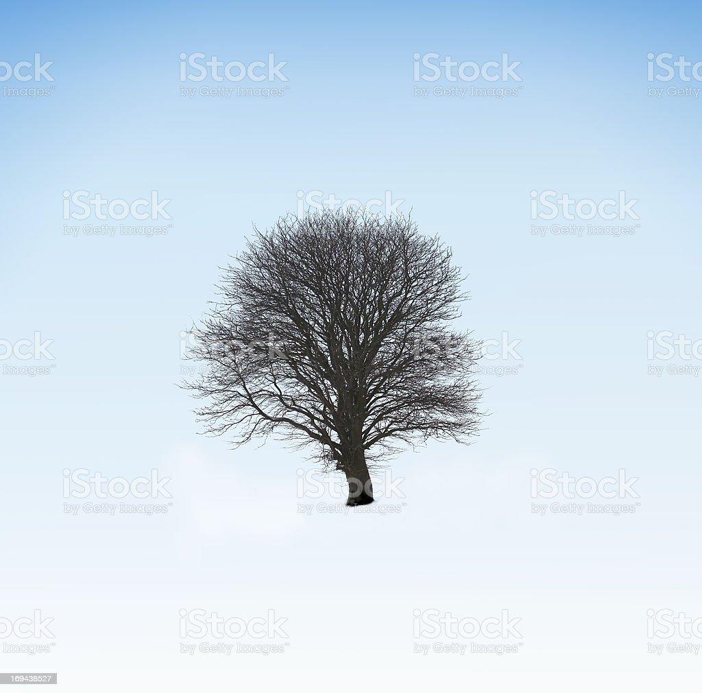 "Winter wonder"""" Lizenzfreies stock-foto"