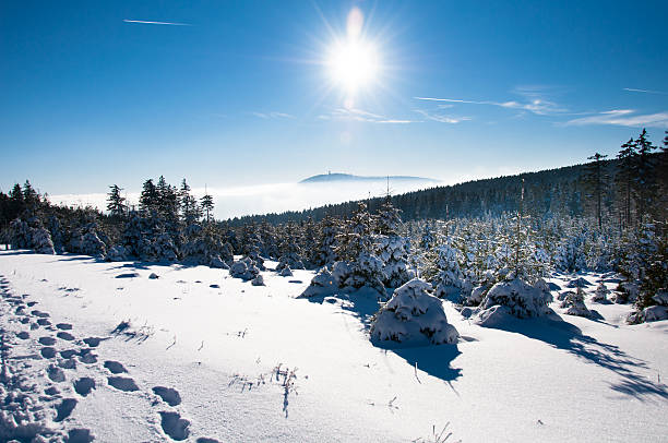 winter wonderland im harz national park - harz stock-fotos und bilder