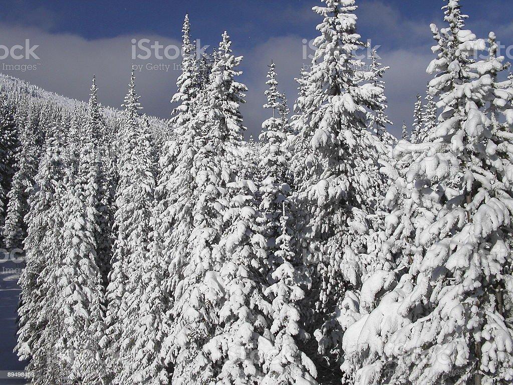 Winter wonderland royalty free stockfoto
