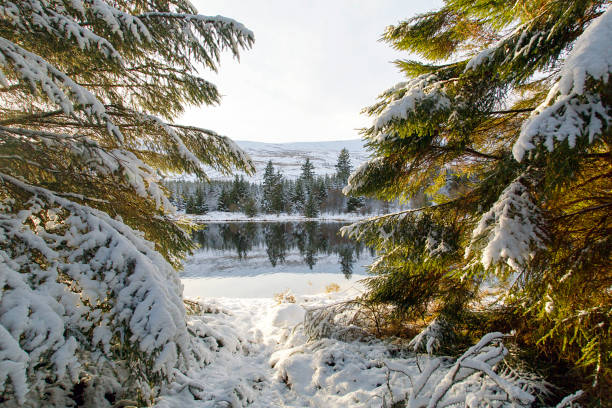 Winter Wonderland Enchanting snowy landscape with backlit pine trees at Brecon Reservoir near Pen y Fan in the Brecon Beacons National Park. brecon beacons stock pictures, royalty-free photos & images