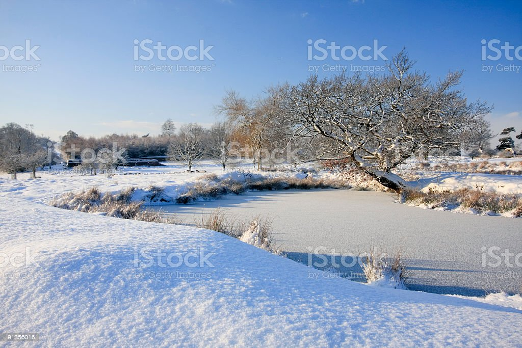 Winter wonderland royalty-free stock photo