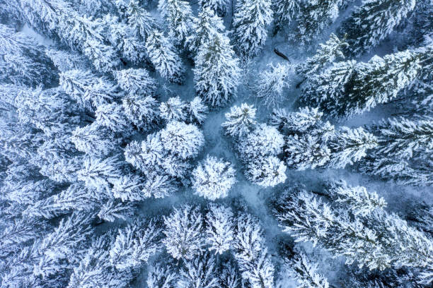 vinter skog täckt med snö och frost - norrbotten bildbanksfoton och bilder