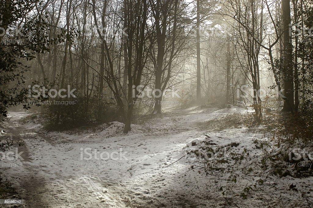 Winter woodland morning royalty-free stock photo