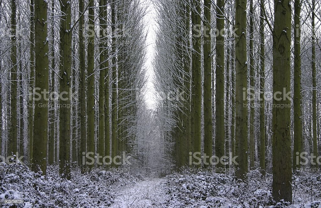 winter woodland pathway royalty-free stock photo