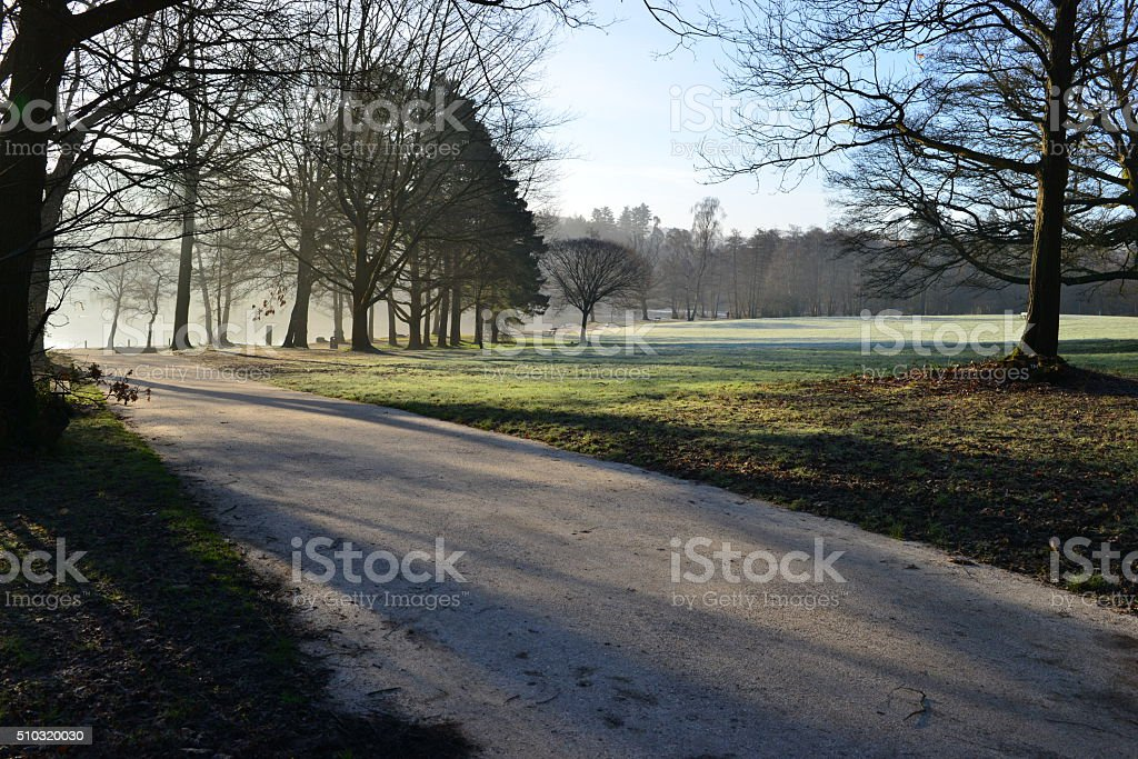 WInter woodland stock photo