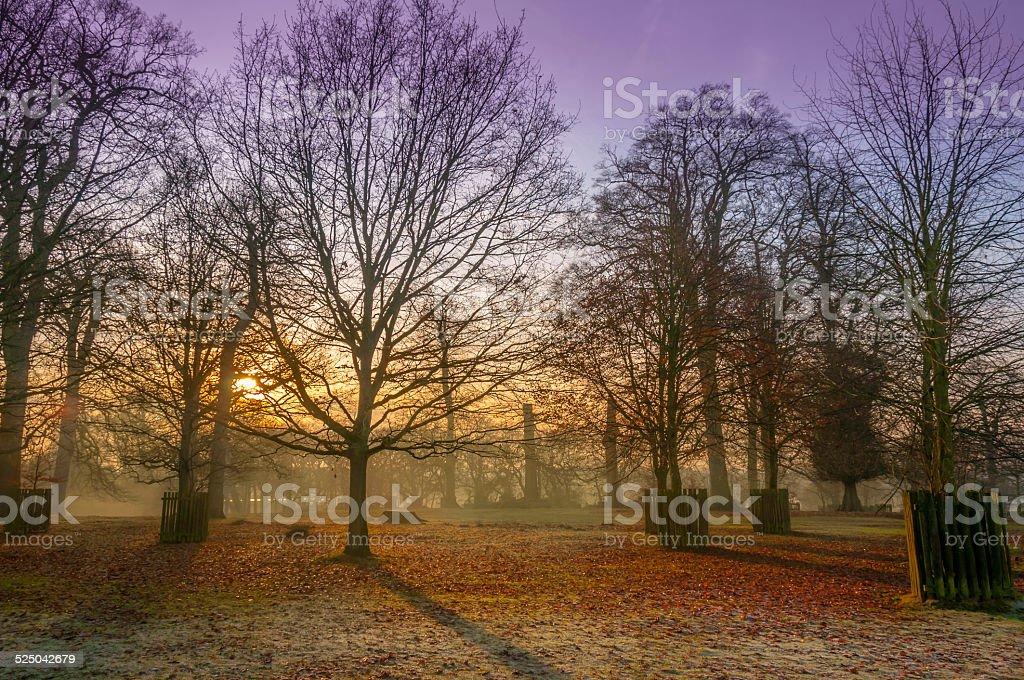 Winter Woodland Sunset stock photo