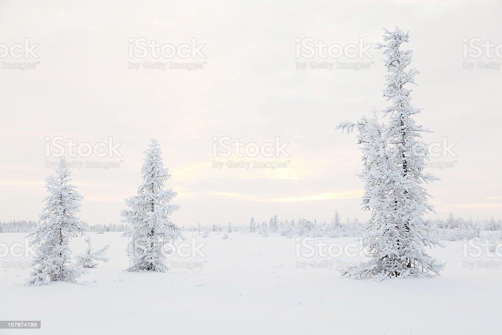 Winter Yamal, Russia stock photo