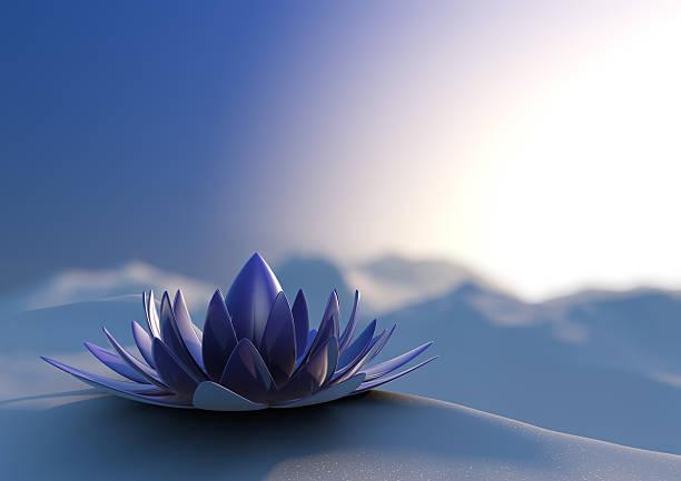 Winter zen-Blume – Foto