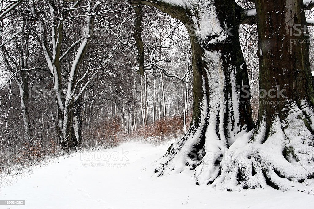 winter12 royalty-free stock photo