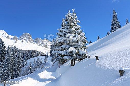 istock winter_dream 1033315170