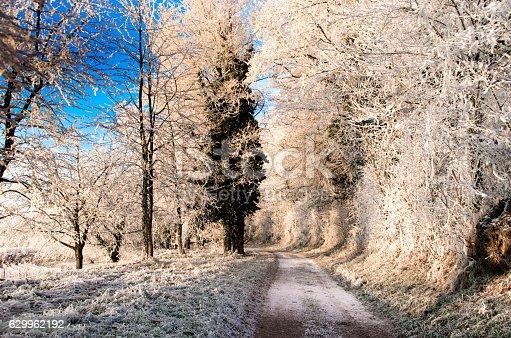 istock winterdream 629962192