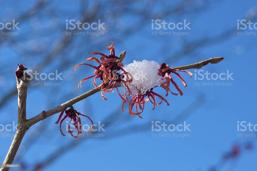 Winterimpressions stock photo