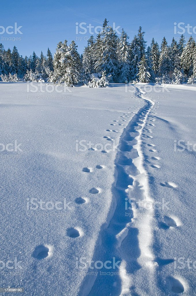 winterlandscape with ski track royalty-free stock photo