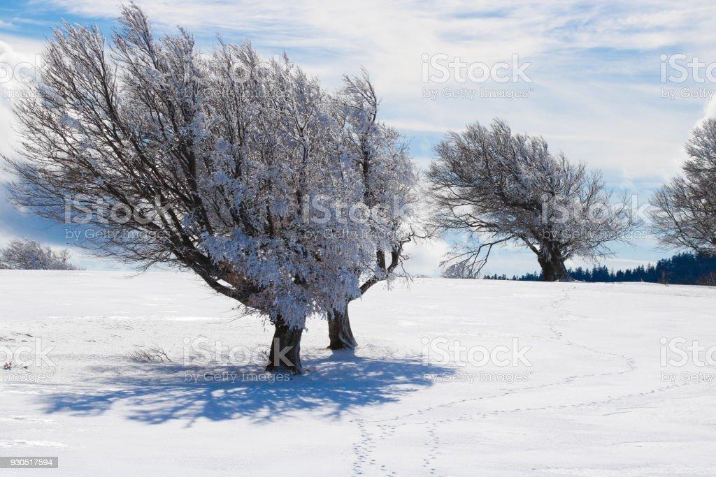 Winterlandschaft auf dem Schauinsland stock photo