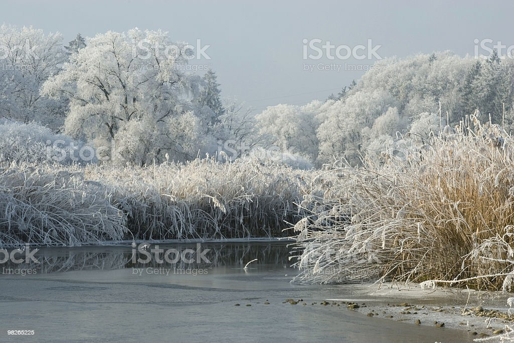 Winterlandschaft mit Raureif foto stock royalty-free