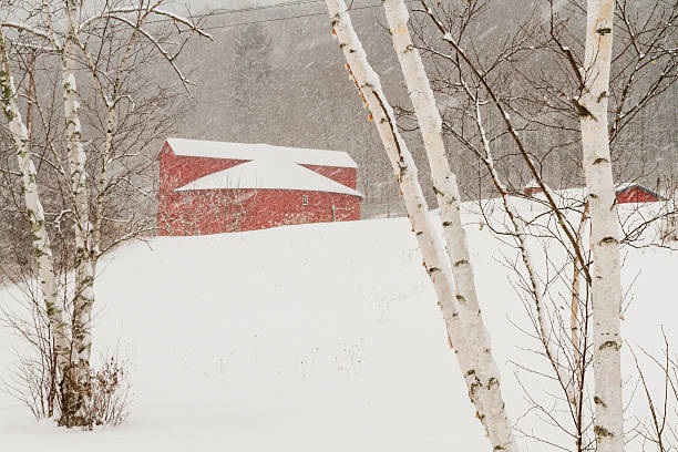 Winter's Day at the Round Barn Birch trees and the Pakatakan Round Barn on a snowy winter's day in the Catskills Mountains of New York. catskill mountains stock pictures, royalty-free photos & images