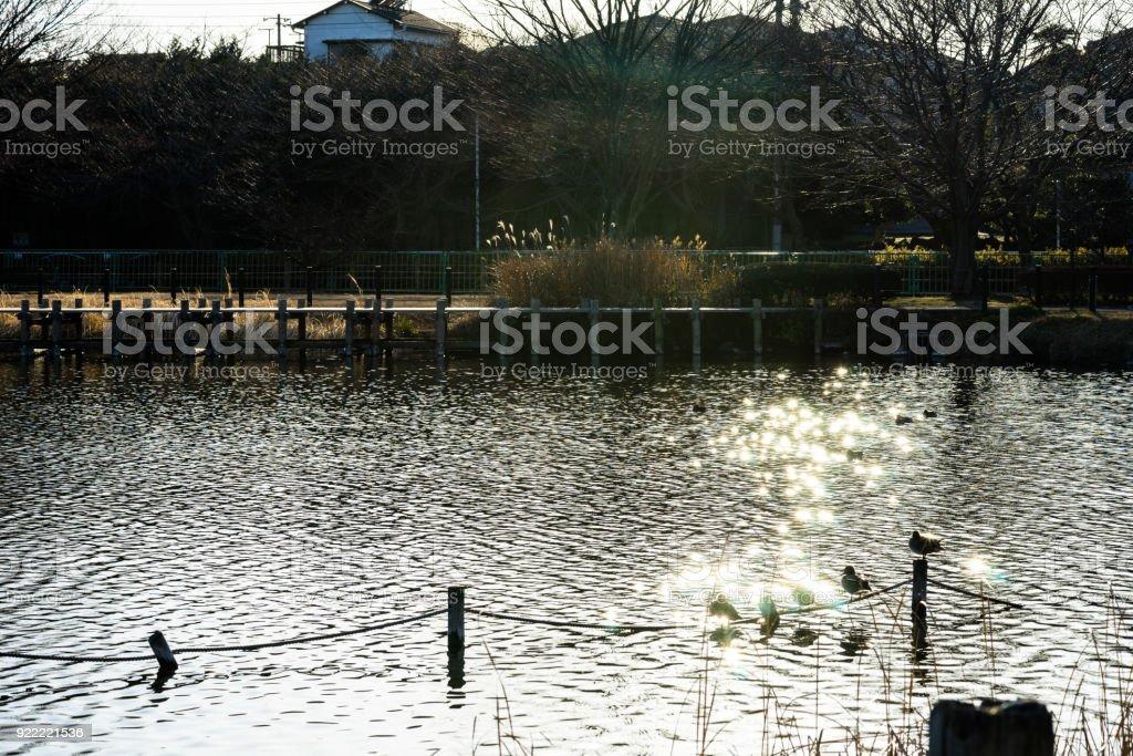 Winter's Kadoike Park stock photo